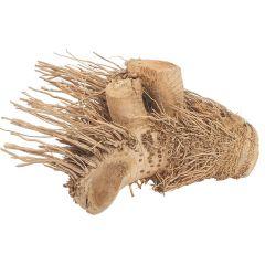 Hedgehog Bamboo Root
