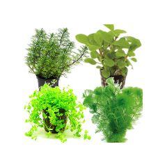 Set Convenienza 3 Piante A Crescita Rapida