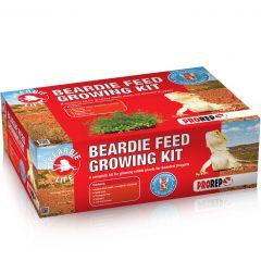Beardie Feed Growing Kit