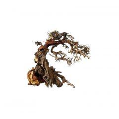 Ada Bonsai Wood 1