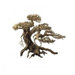 Ada Bonsai Wood 3