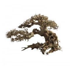 Ada Bonsai Wood 4