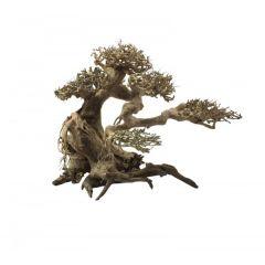 Ada Bonsai Wood 5