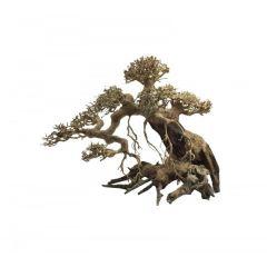 Ada Bonsai Wood 6