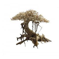 Ada Bonsai Wood 7