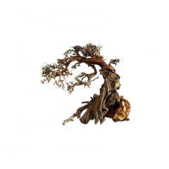 Ada Bonsai Wood 8