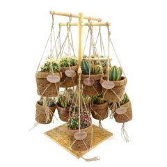 Cactus misto in fibra di cocco sospeso