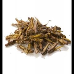 Locuste essiccate 100gr