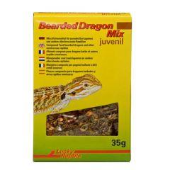 Lucky Reptile - Bearded Dragon Mix Juvenile