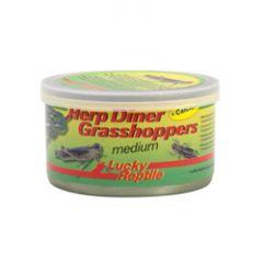Lucky Reptile Herp Diner Grasshoppers Medium 35g