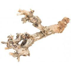 Kuwa Root 25-30cm