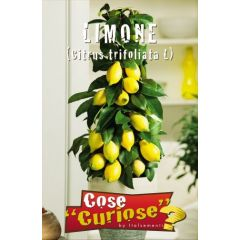 Semi Pianta di Limone