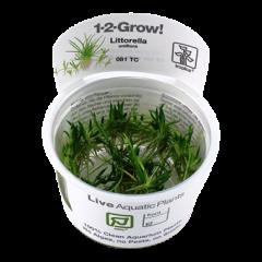 Tropica Littorella uniflora 1-2-Grow!