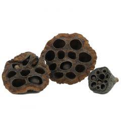 Lotus Pods - 3 pezzi