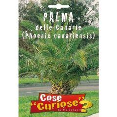 Semi Palma Delle Canarie (phoenix Canariensis)