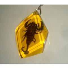 Portachiavi Con Vero Scorpione Conservato In Resina Sintetica