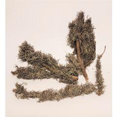 Rami con Licheni Naturali - 4 Pezzi