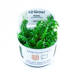 Tropica Rotala rotundifolia 'Green' 1-2-Grow!