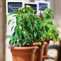 Kit Orto da Balcone - 3 Set completi per coltivare in vaso