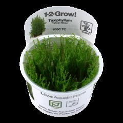 """Tropica Taxiphyllum Alternans """"Taiwan Moss"""" 1-2-Grow!"""