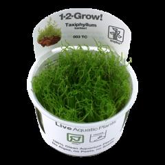 Tropica Taxiphyllum barbieri 1-2-Grow!