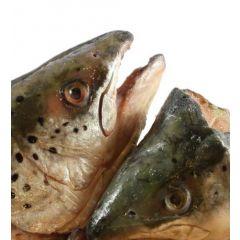 Teste di salmone intere 800gr