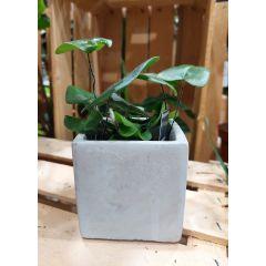 Vaso in cemento Quadrato 9x9x9cm