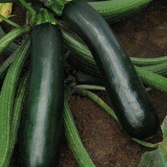 Zucchino EASYPICK GREEN in vaso 11cm - Linea Orto da Balcone
