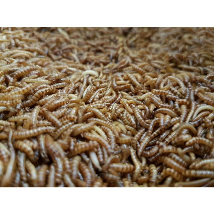1 Litro Buffalo Worms
