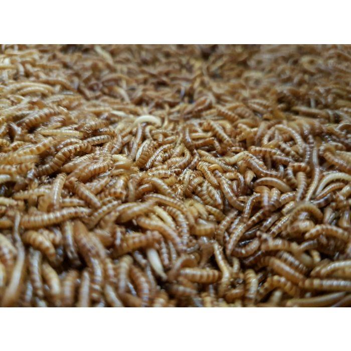 Dose Buffalo Worms