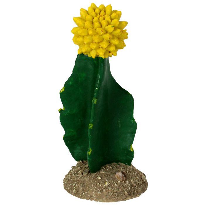 Golden Gilia Cactus
