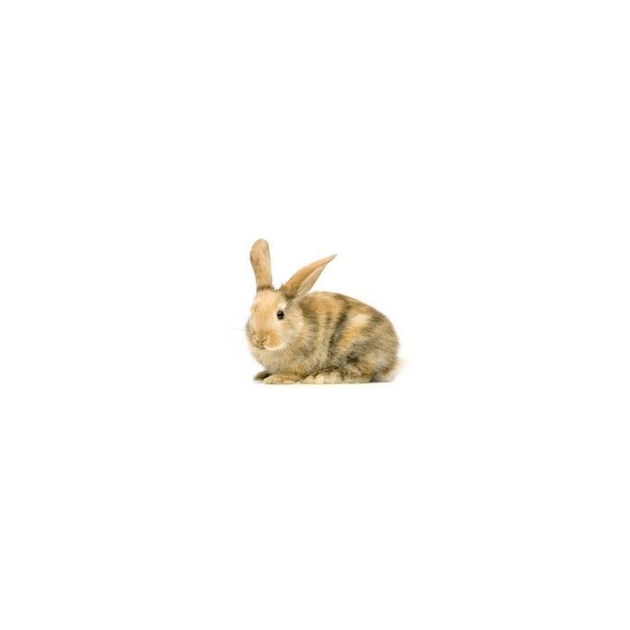 Conigli Piccoli Congelati - 2 pezzi da 500gr