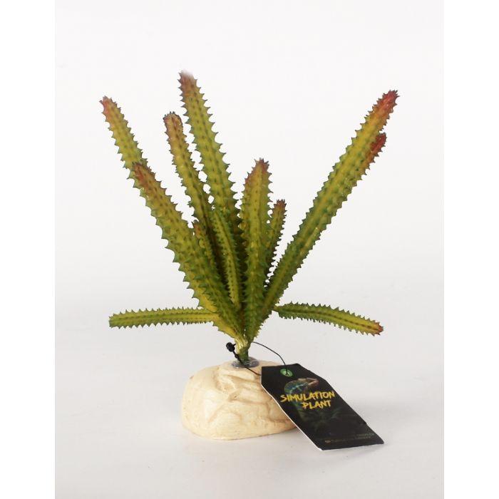 Dr.Raptor - Euphorbia Cactus