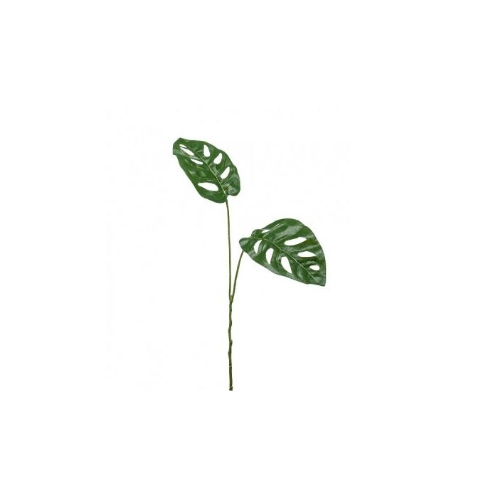 Philodendron Monstera Leaf - 50cm
