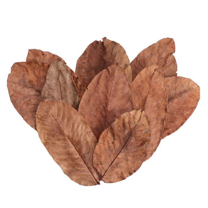 Foglie di Guava essiccate 15 pezzi