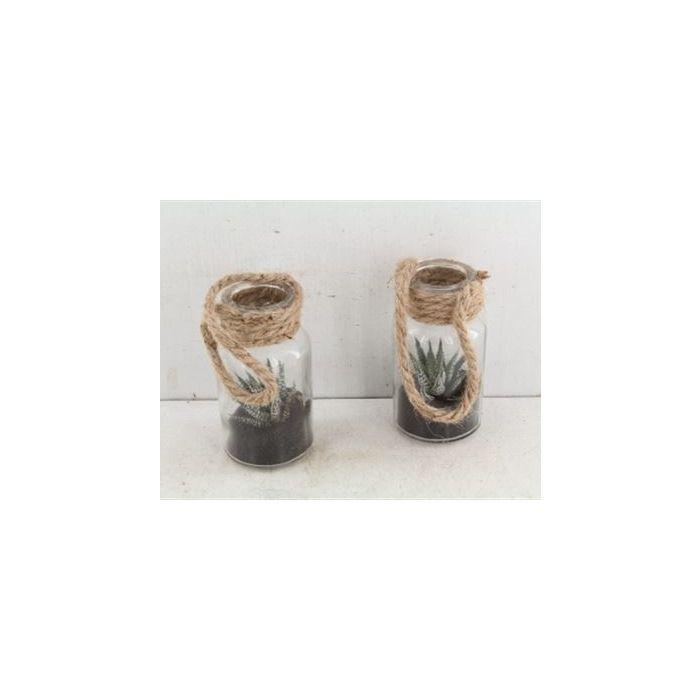 Haworthia in Bottiglia di vetro da appendere