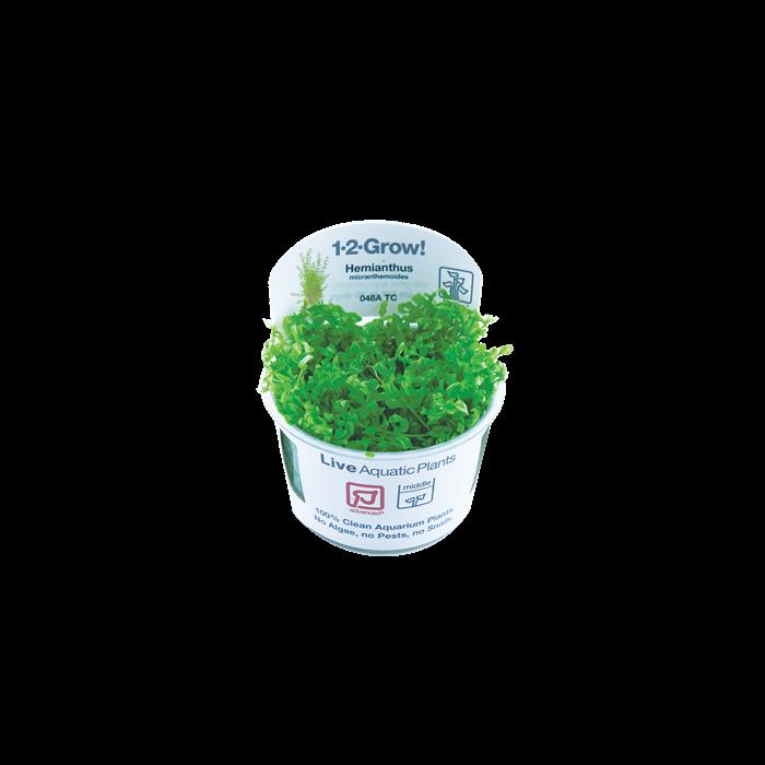 Tropica Hemianthus micranthemoides 1-2-Grow!