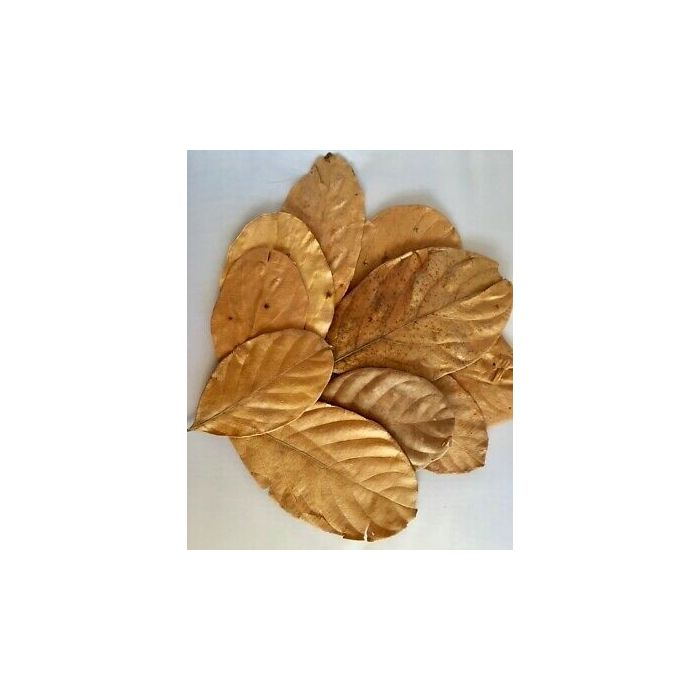 Foglie di Jackfruit essiccate 20 pezzi