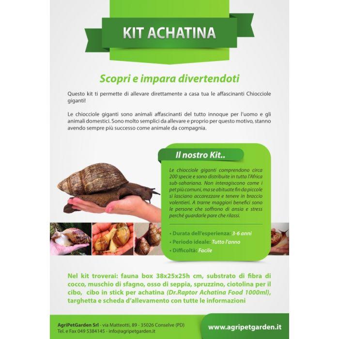 Achatina Kit - Kit didattico allevamento Chiocciole Giganti
