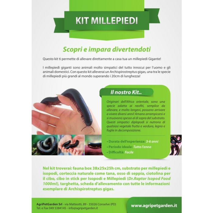 Millepiedi Kit - Kit didattico allevamento Archispirotreptus gigas - Millepiedi Gigante