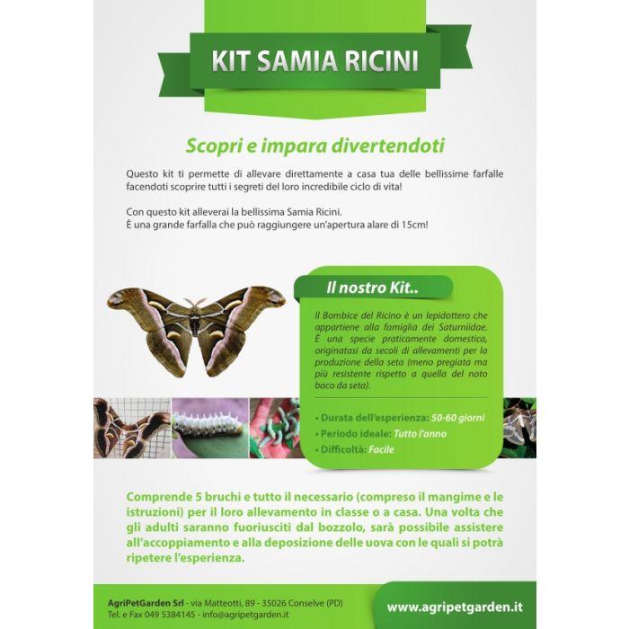Kit didattico allevamento Samia Ricini