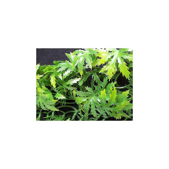 Komodo Papaya Leaf Vine 35cm
