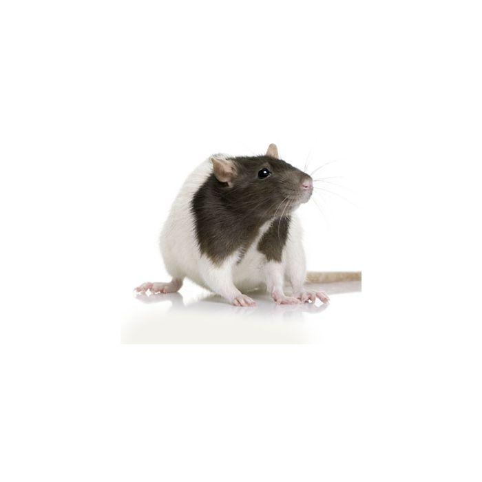 Ratti Large (150-250gr) - 5 Pezzi
