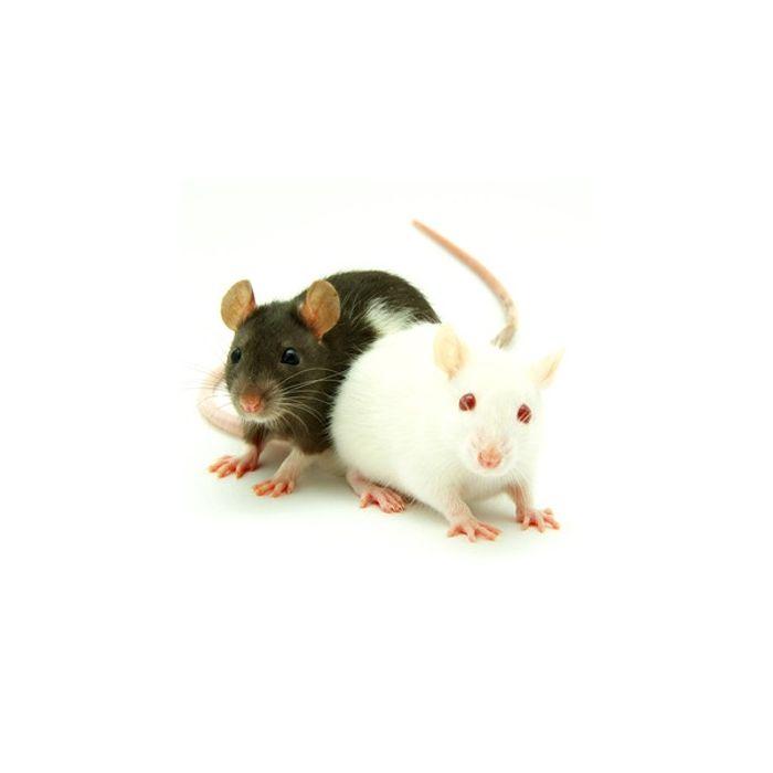 Ratti Small (30-50gr) - 10 Pezzi