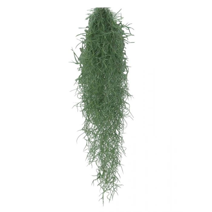 Tillandsia usneoides - 75cm