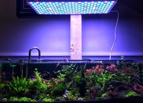 illuminazione acquari