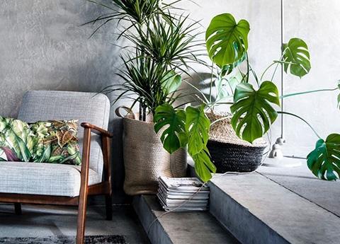 Piante da interno piante - Piante rampicanti da interno ...