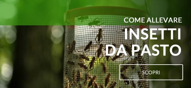 come allevare insetti da pasto