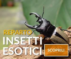reparto insetti esotici
